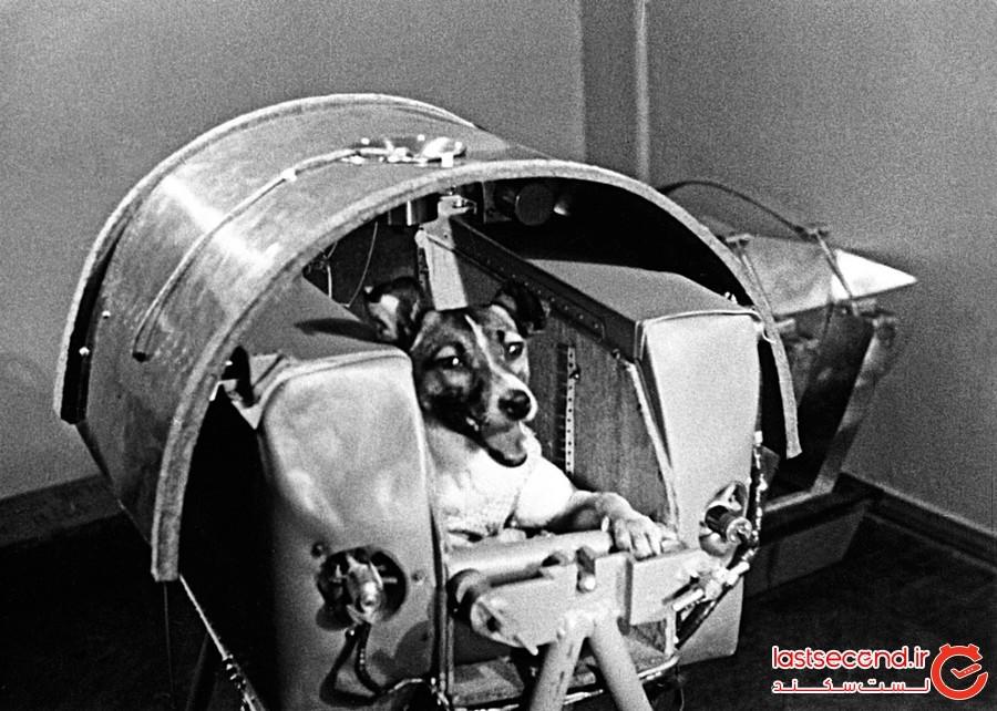 کمپین یاد بود فیلیست؛ اولین گربه ای که به فضا رفت!