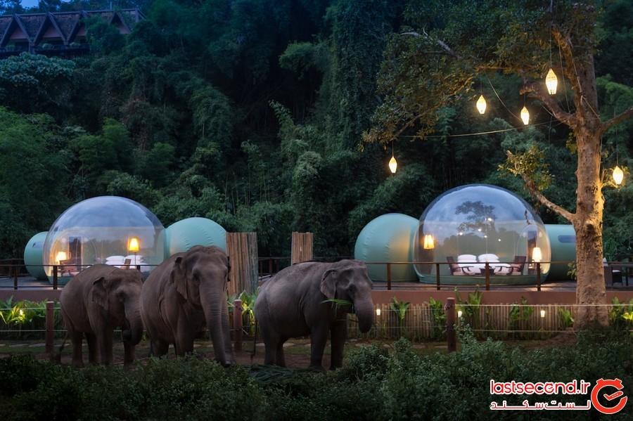 کمپ فیل ها؛ تجربه ای متفاوت از اقامت در حیات وحش