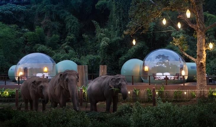 کمپ فیل ها؛ تجربه ای متفاوت از اقامت در حیات وحش!