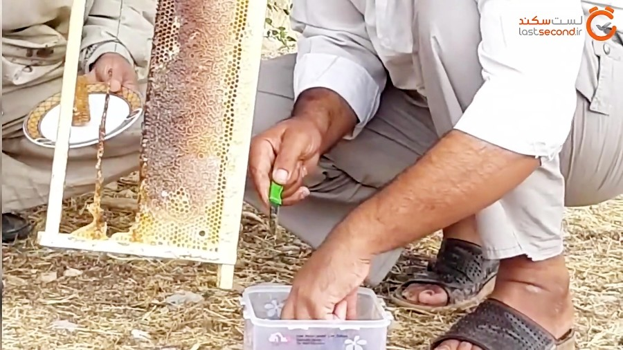 کول خرسون و برداشت عسل زنبورداران