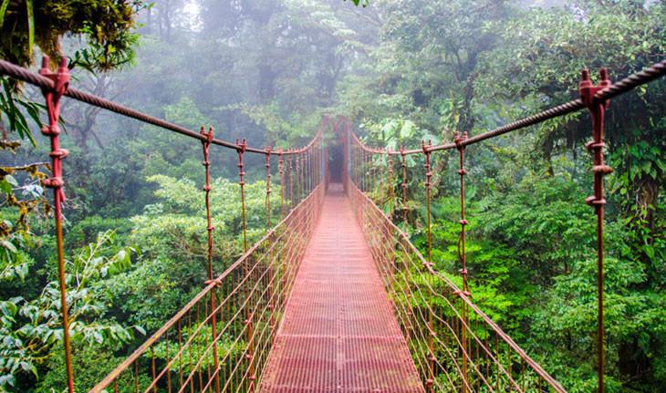 با زیباترین جنگل های جهان آشنا شوید!
