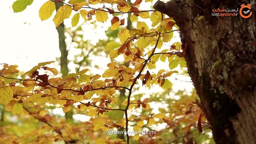 پاییز هزار رنگ در النگدره گرگان