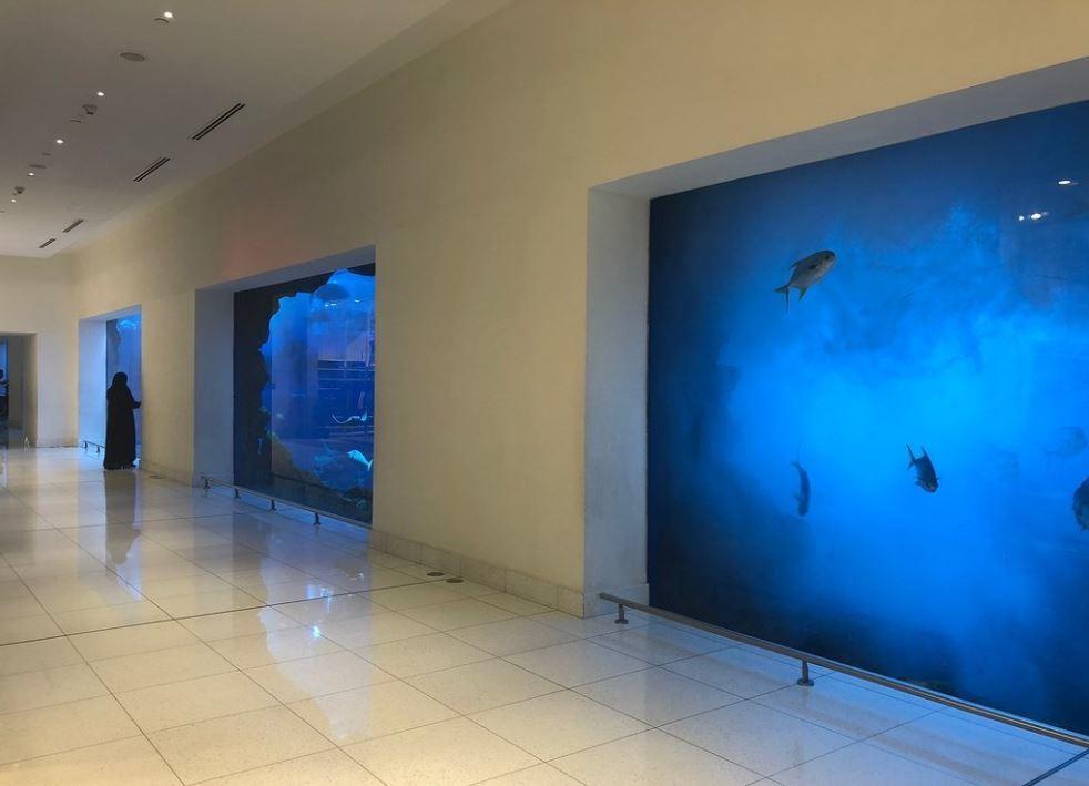 dubai-aquarium-underwater-zoo (4).JPG