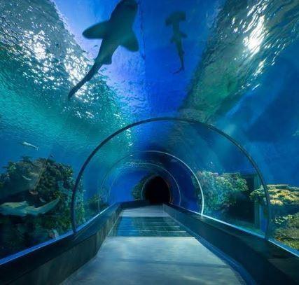 dubai-aquarium-underwater-zoo (2).JPG