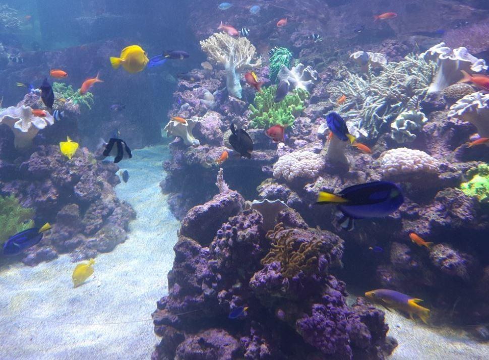 dubai-aquarium-underwater-zoo (6).JPG