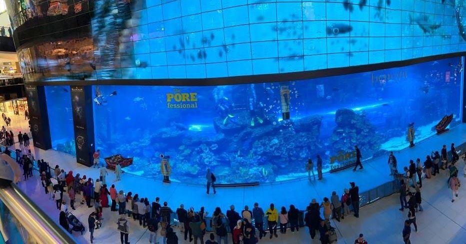 dubai-aquarium-underwater-zoo (1).JPG