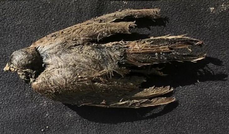راز پرنده 46000 ساله که حتی پرها و منقارش سالم مانده کشف شد!