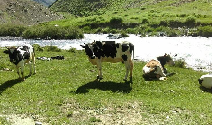 روستای وارنگه رود، زیبایی بی مثال البرز که باید دید!
