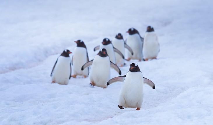 عکاسی از پنگوئن ها؛ تجربه ای لذت بخش با پیام محافظت از زمین