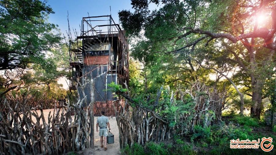 خانه درختی هایی منحصر به فرد که تجربه سافاری را نیز برایتان رقم می زنند
