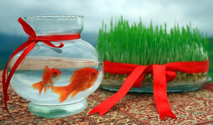 آیا ماهی قرمز هفت سین عامل انتقال کرونا است؟