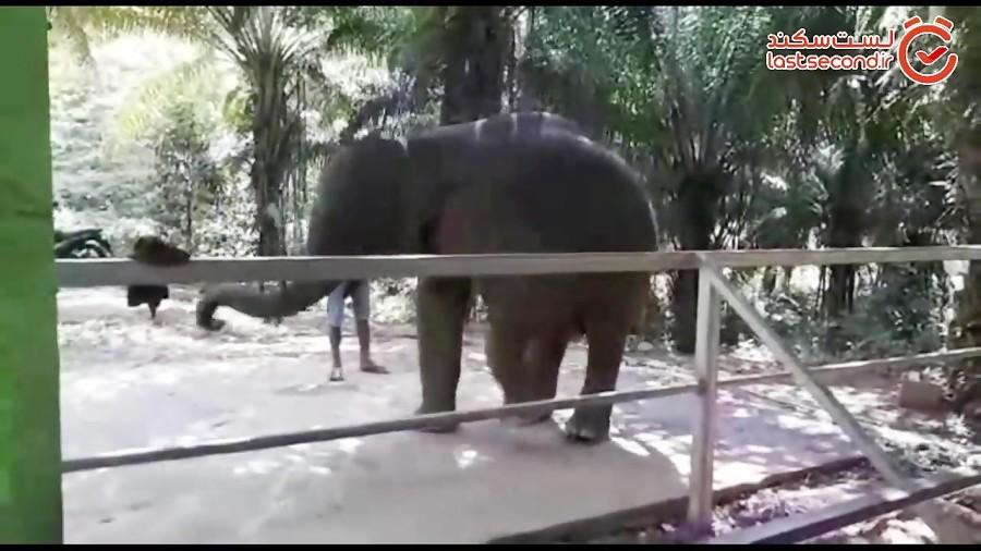 نمایش فیلی که ساز دهنی می زند!