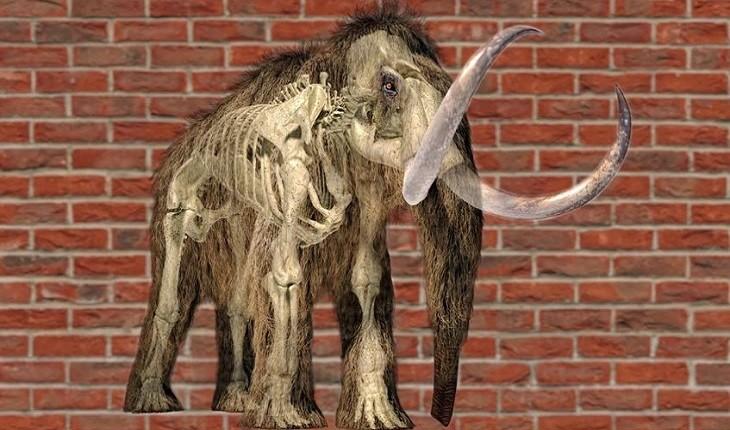ماموتهایی 25000 ساله که گوشت و آتش را تامین میکردهاند