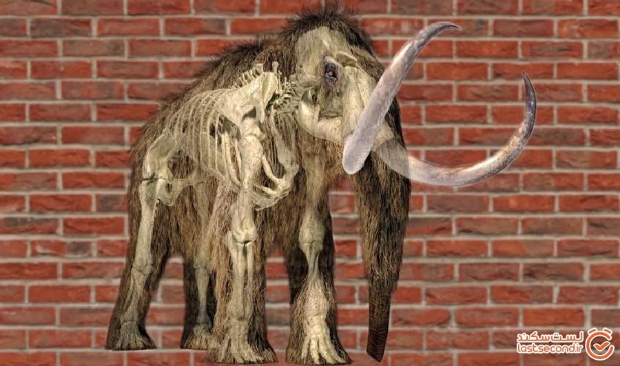 ماموتهایی 25000 هزار ساله که گوشت و آتش را تامین میکردهاند