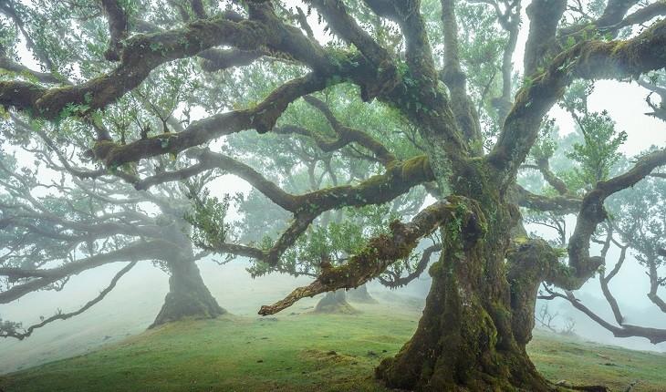 جنگل جزیره مادیرا، جنگلی رویایی و باستانی با درختان 500 ساله