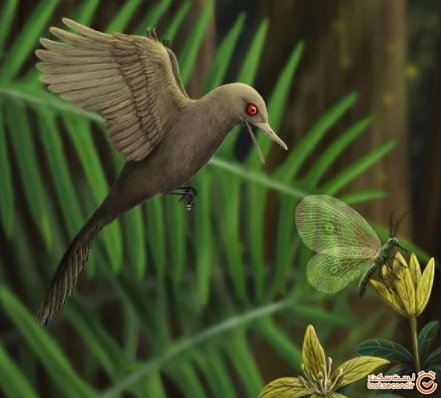دایناسوری شبیه به پرندگان به عنوان کوچکترین دایناسور در میانمار کشف شد!