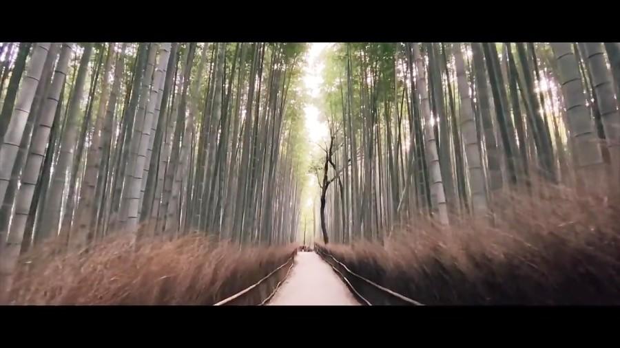 ژاپن را از دریچه دوربین آیفون 11 پرو ببینید!