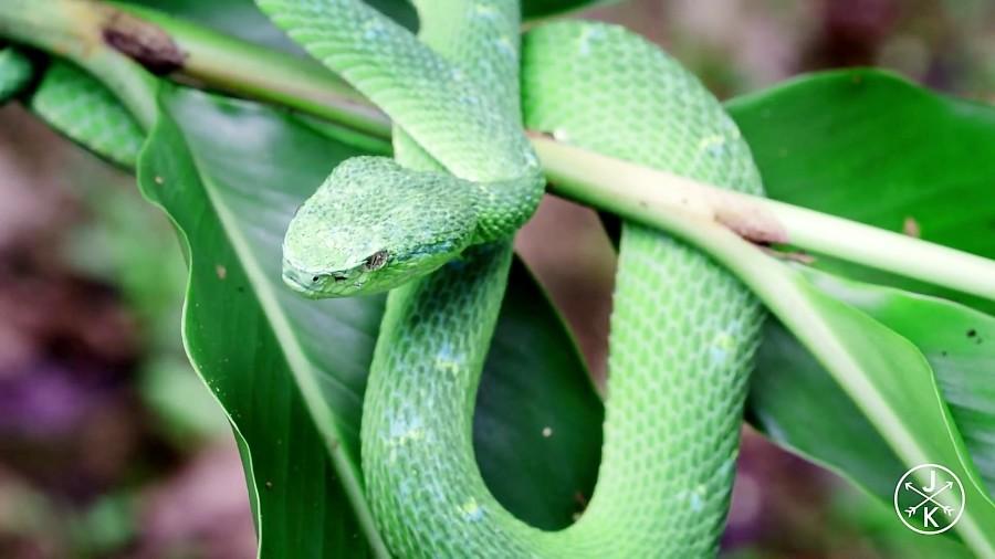 کاستاریکا، کشور شگفت انگیز با طبیعت بکر