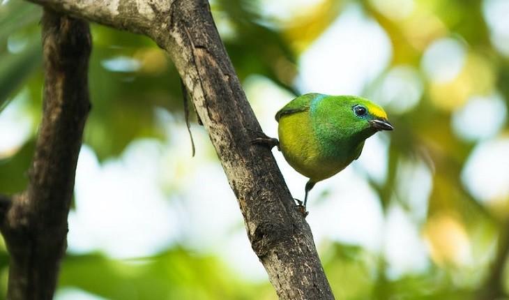 در خانه بنشینید و به تماشای پرنده های کلمبیا بروید!