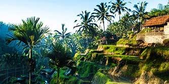 بالی سرزمین عشق