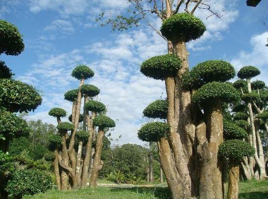 Perdana Botanical Garden (2).JPG