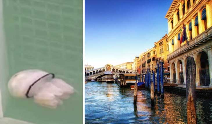 عروس دریایی سرنا در حال شنا در آبهای زلال ونیز دیده شد!