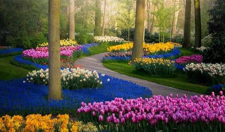 باغهای زیبا و بدون بازدیدکننده ی لاله ی هلند در دوران کرونا!