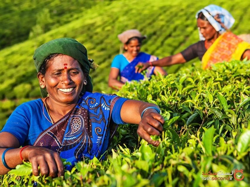 6  منطقه اصلی برداشت چای در آسیا که باید بشناسید