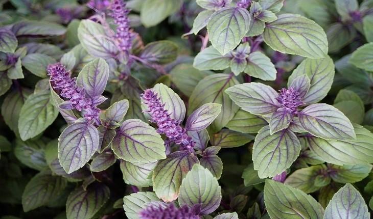 این بهار با کاشتن این گیاهان بین المللی جهان را  به باغچه تان بیاورید
