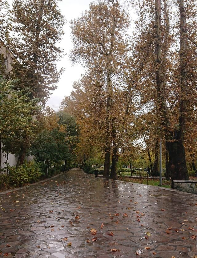 (Arezoo park (kashef (1).jpeg