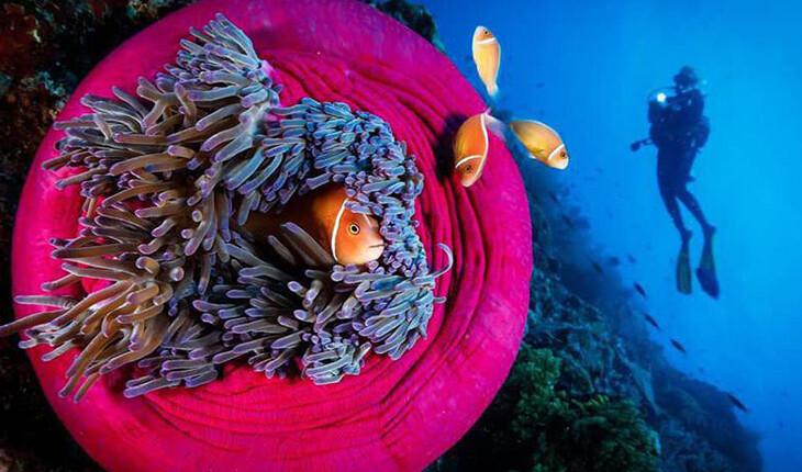 زندگی در اعماق آبهای نقاط مختلف دنیا چگونه است؟