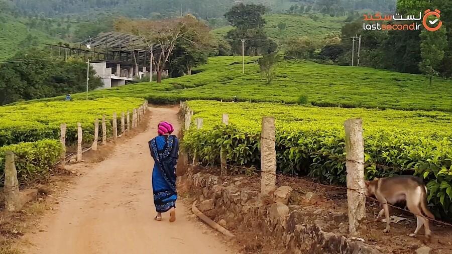 سفر به هند - از کودایکانال تا مونار
