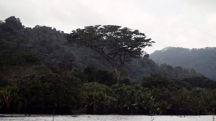 دقایقی در طبیعت شگفت انگیز ماداگاسکار