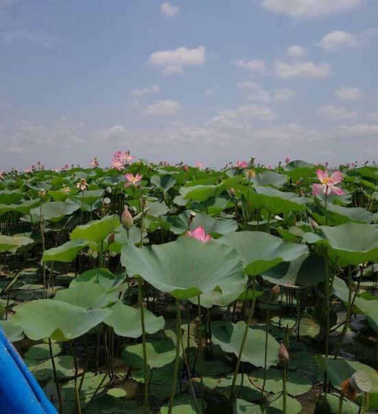Anzali Lagoon (2).JPG