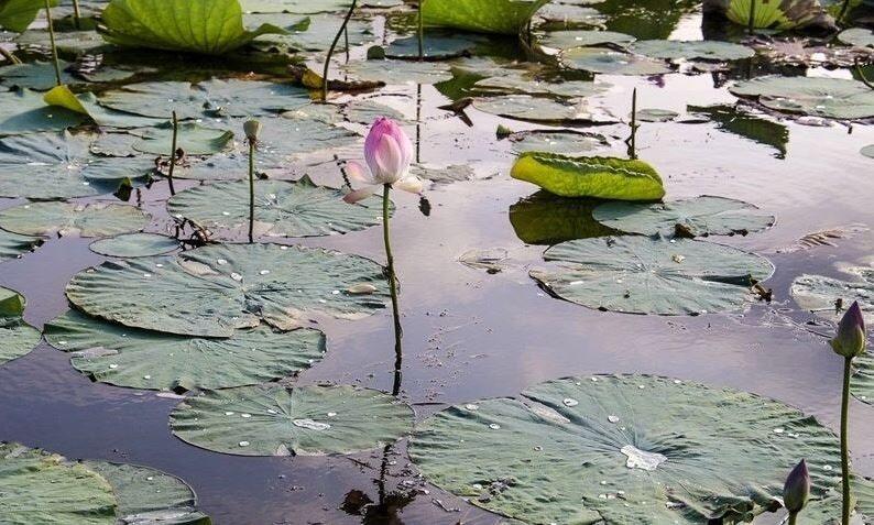 Anzali Lagoon (4).JPG