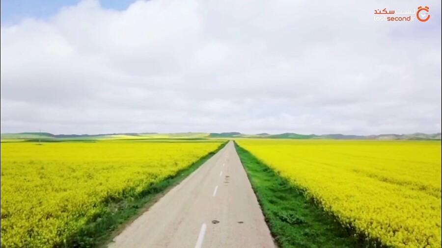نقاشی زرد رنگِ طبیعت در مزارع گلستان