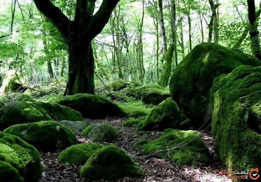 پارک خشکهداران، تنها میراث جلگه ای در تنکابن