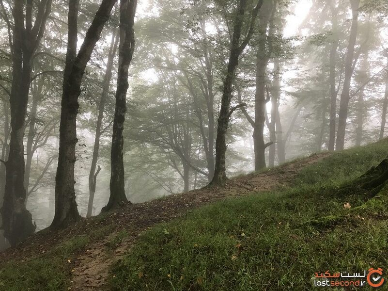 دالخانی، جنگل پنهان شده در مه رامسر