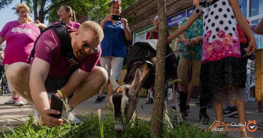 در این شهرهای ایالات متحده حیوانات شهردار انسانها میشوند.