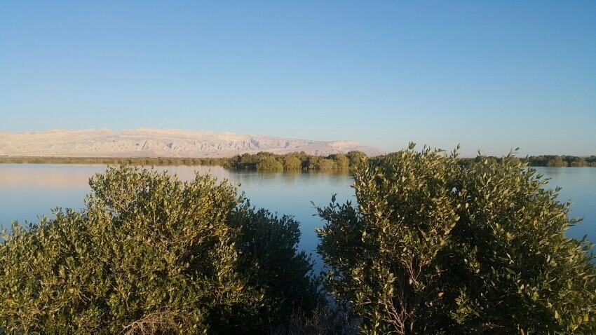 Mangrove Jungle4.jpeg