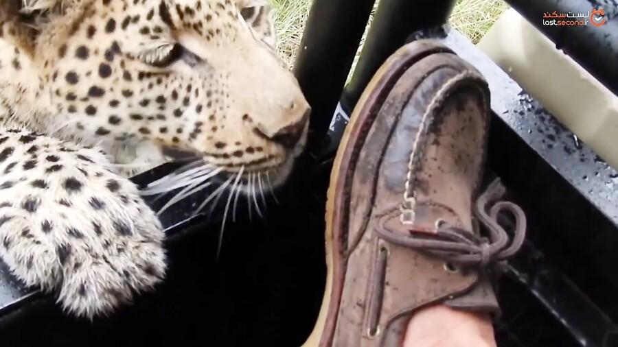 هیجان انگیزترین لحظات ثبت شده در سافاری توسط گردشگران