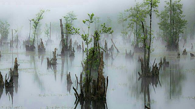 تالاب ارواح و فراخین، جنگل دراسرا و غار دانیال ( سفری در جنگل های مازندران )