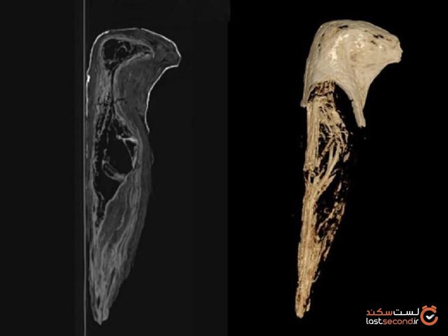 سیتیاسکنهای انجامشده نشان میدهند که داخل مومیاییهای مینیاتوری جسد انسان قرار ندارد
