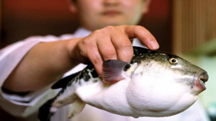 ماهی سمی ، وقتی جان شما در دستان سرآشپز است!