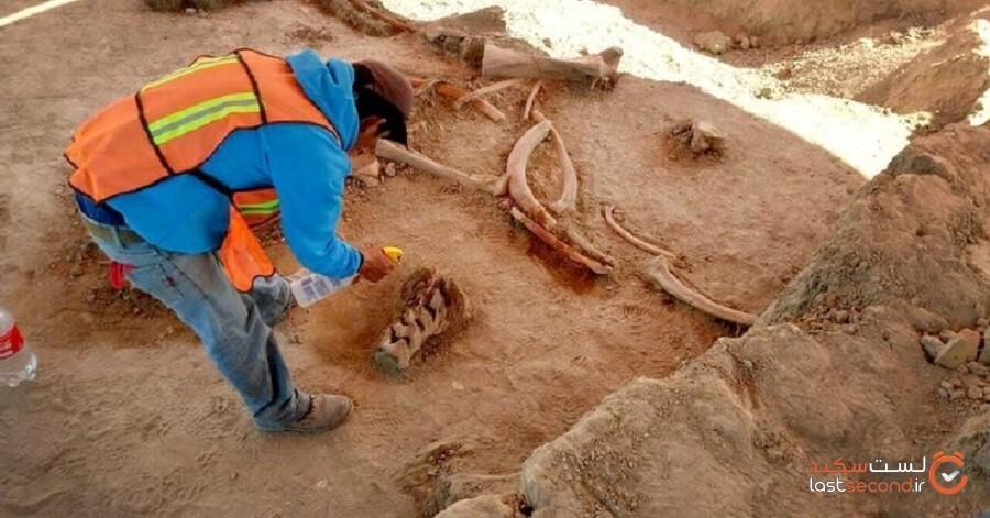 پیدا شدن اسکلت 200 ماموت در مکزیکوسیتی تعجب همگان را برانگیخت!