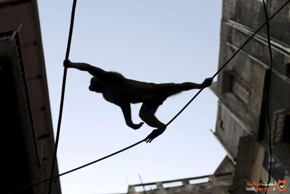 monkey-wires-e1590773355108.jpg