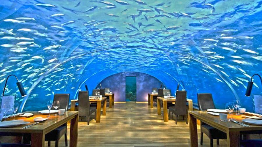 رستوران ithaa، رستورانی مجلل زیر دریایی در مالدیو