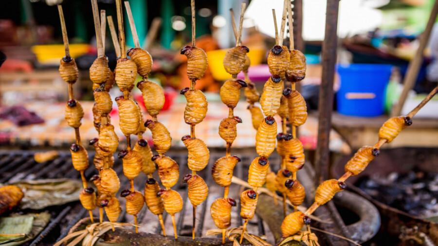 کرم های خوش خوراک، غذای محبوب اکوادور!