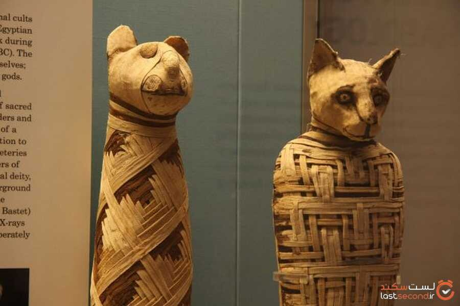 Egypt-mummies-cats.jpg