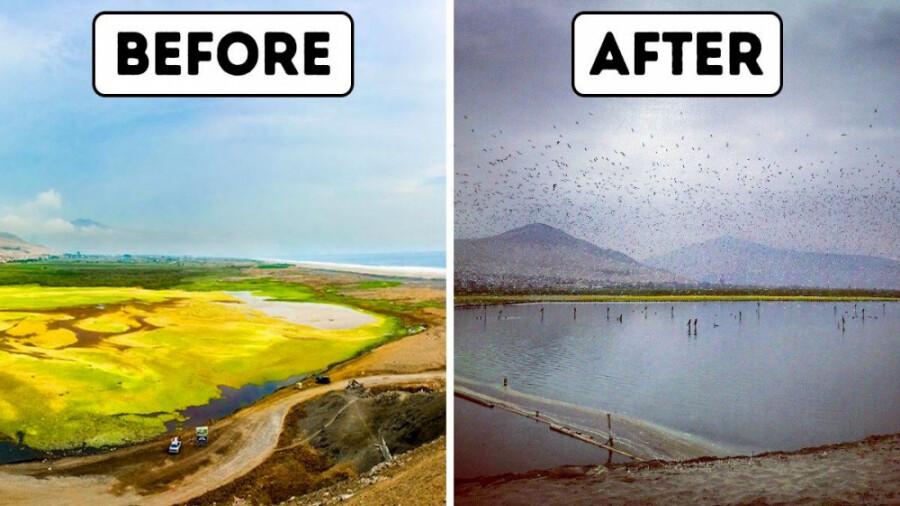 چگونه این مرد یک دریاچه بزرگ را تمیز و شفاف کرد؟